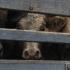 Přeprava živých zvířat