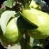 Ovocné stromy a keře