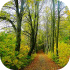 Lesy a obory