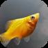 Akvarijní rybičky sladkovodní