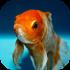 Akvarijní rybičky mořské