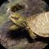 Ostatní akvarijní živočichové