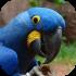 Papoušci - ostatní