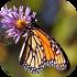 Motýli, housenky motýlů