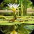 Vodní a bahenní rostliny