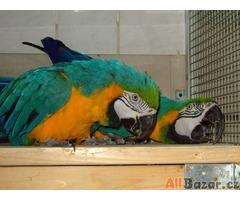 roztomilý papoušek papoušci s papíry