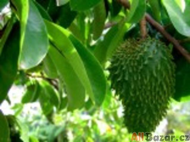 Naklíčená Exotická semena - neoseeds