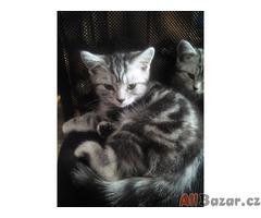 Prodám Whiskas koťátko s PP