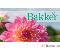 Práce v Nizozemsku pro firmu Bakker!