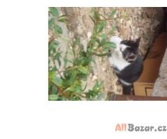 Daruji koťata ZDARMA