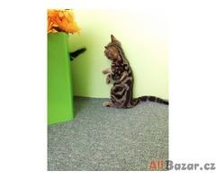 Whiskas kočička