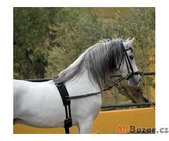 Napájení a přítomnost! Ohromující PRE Andaluský hřebec