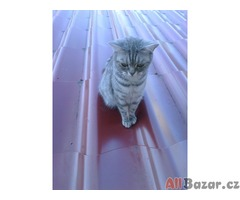 Britská whiskas koťátka bez PP