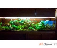 Kompletní akvárium