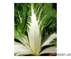 Mangold Lucullus - semena