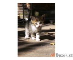 Daruji krásná koťata