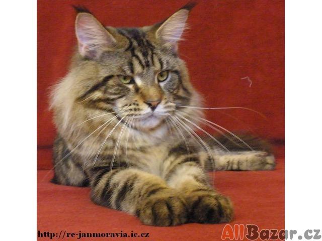 Zdarma krásné kočička obrázky