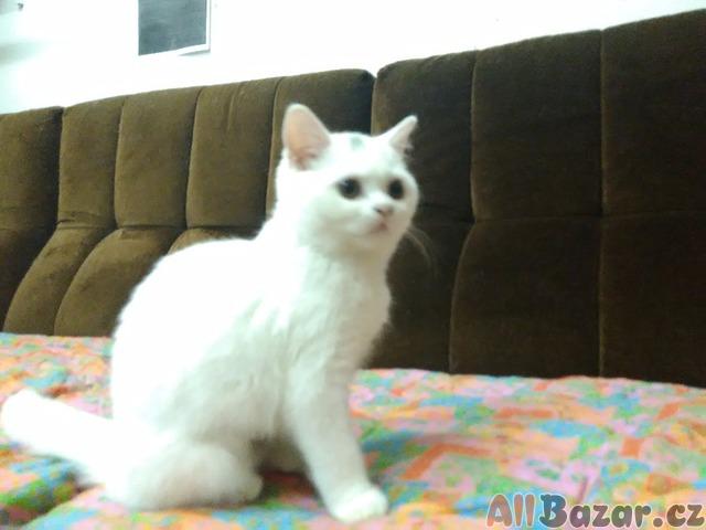 indická kočička pevně