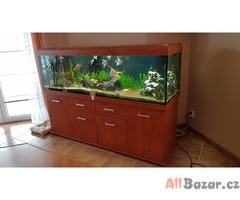 Akvárium 720l s kompletním vybavením a dekoracemi