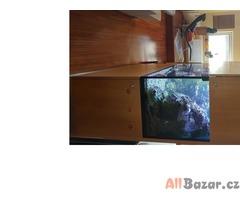 Akvárium pro mořský život s full systémem