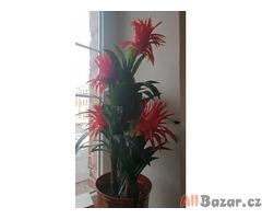 prodám velkou umělou rostlinu palma guzmanii tato epifitní rostlina pochází z tr