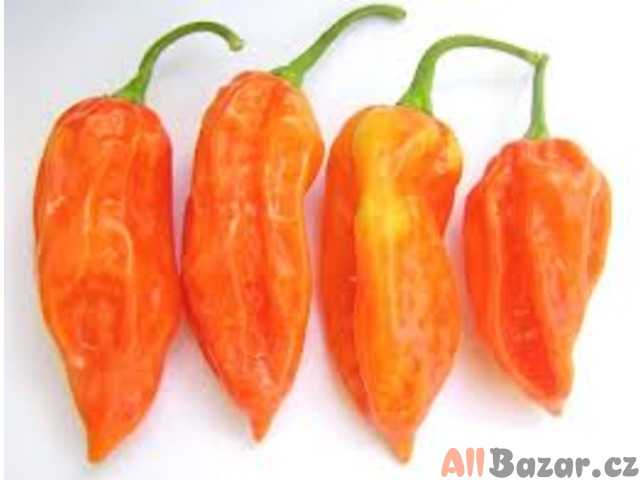 Chilli Jolokia Peach - semena