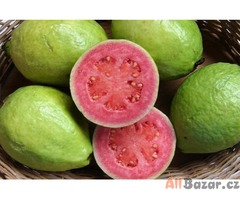 Psidium guajava - semena