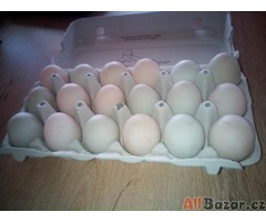 Čerstvá kachní vejce
