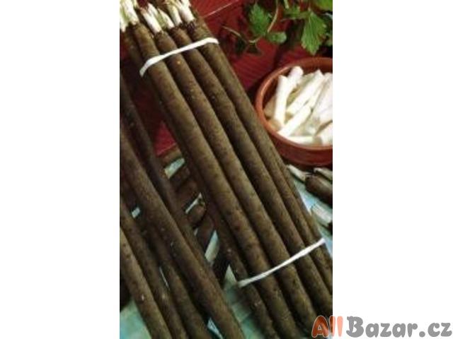 Černý kořen Libochovický - semena