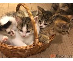 Darujeme krásná koťátka
