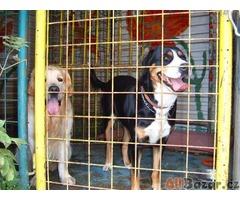Hlídání psů - ubytování v psím hotelu AX