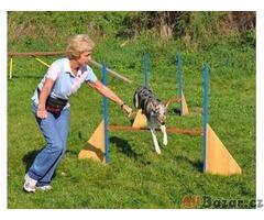 Výcvik všech plemen psů - cvičiště U Puntíků