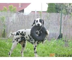 Školička pro štěňata - Cvičiště U Puntíků