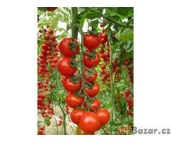 Rajče Ciliegino di Pachino - semena