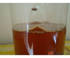 Kombucha kvasný čajový nápoj