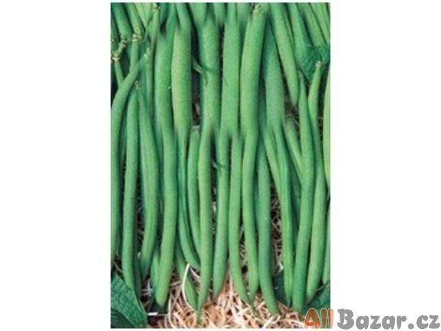 fazol XERA NANO - semena