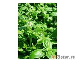 Bazalka citronová - semena