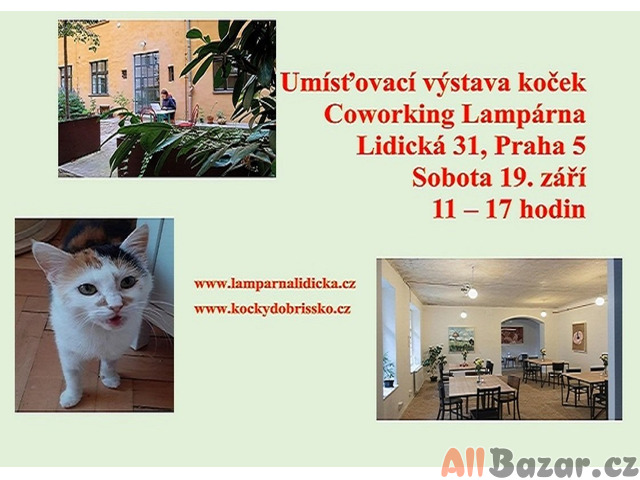 Umísťovací výstava koček na Smíchově