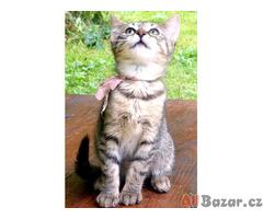 koťata - mourci