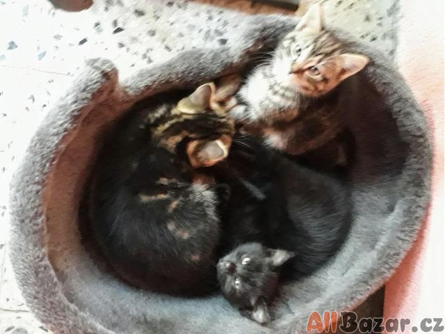 Koťátko vám udělá útulný domov!