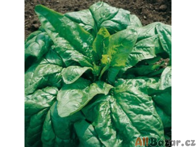 špenát Viroflay - semena