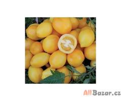 rajče Lemon Plum - semena