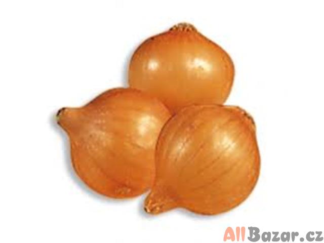 Cibule Stoccarda - semena
