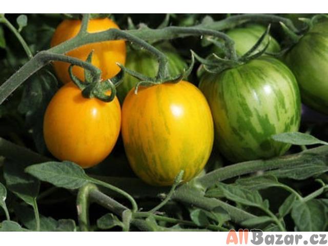 rajče Rambling Gold Stripe - semena
