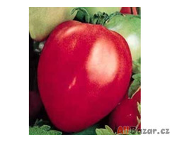 rajče Býčí srdce - semena