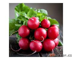 Ředkvička Rosso Gigante Sardo-semena