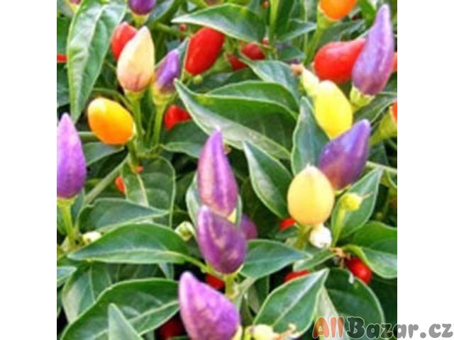 Chilli Numex Twilight - semena