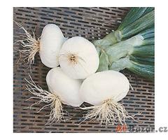 cibule Aprilatica San Michele - semena