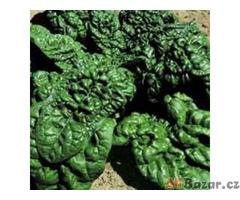 špenát Riccio America - semena