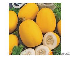 Meloun cukrový wine peach  - semena